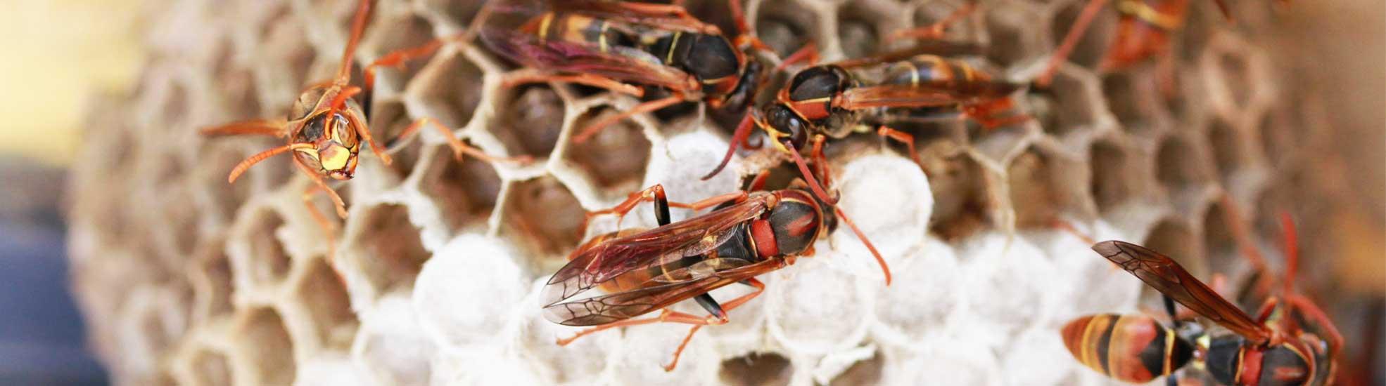 General-Pest-Inspections-Sydney-Dylan-Cope-Pest-Control